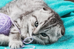 Kitten playing with a ball of yarn Stock Photo