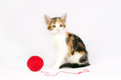 Kitten playing with a ball of yarn Royalty Free Stock Photos