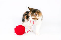 Kitten playing with a ball of yarn Royalty Free Stock Image