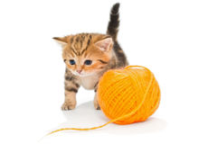 Kitten playing with ball of yarn Royalty Free Stock Image