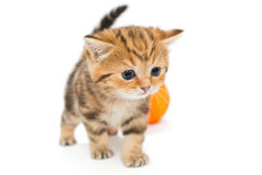 Kitten playing with ball of yarn Royalty Free Stock Photography