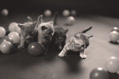 Kitten Playing Balls Royalty Free Stock Images