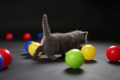 Kitten playing balls Royalty Free Stock Photography