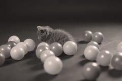 Kitten playing balls Stock Photo