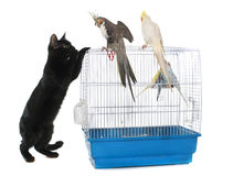 Kitten playing with bird Stock Photography