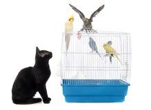 Kitten playing with bird Stock Photos