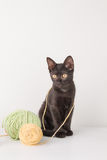 Kitten playing with wool Stock Photography