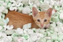 Kitten playing in box Stock Image