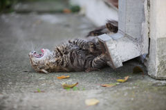 Kitten playing Royalty Free Stock Images