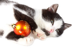 Kitten playing with christmas decoration Royalty Free Stock Image