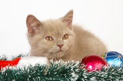 Kitten playing with Christmas Decorations Royalty Free Stock Photo