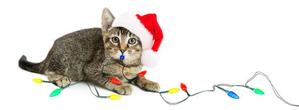 Kitten Playing With Christmas Lights Imágenes de archivo libres de regalías
