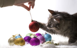 Kitten playing with Christmas ornaments Royalty Free Stock Image