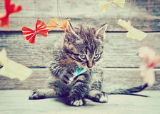 Kitten is playing with colorful paper bow Royalty Free Stock Photo