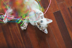 Kitten Playing With Colourful Threads Stock Images