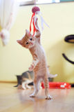 Kitten. Playing and enjoy in his room Stock Photo
