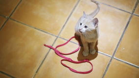 Kitten playing on the floor in the home. Slow Motion stock footage