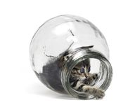Kitten playing in glass bottle Royalty Free Stock Images