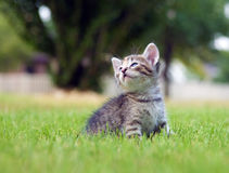 Kitten playing in the grass Royalty Free Stock Photos