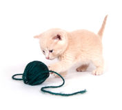 Kitten playing with green yarn Stock Photos