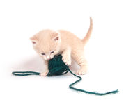 Kitten playing with green yarn Royalty Free Stock Photo