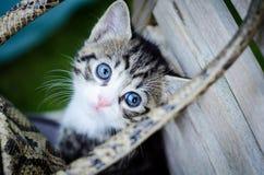 Kitten playing hide and seek. Sweet lloking kitten playing in a garden  chair Royalty Free Stock Photo