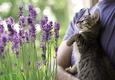 Kitten playing with insects on flowers Stock Images