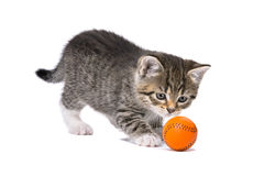 kitten playing with a little orange ball stock photo