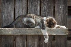 Kitten playing outdoors stock photo