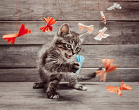 Kitten playing with paper bows Stock Photo