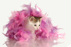 Kitten playing in pink feathers Royalty Free Stock Images