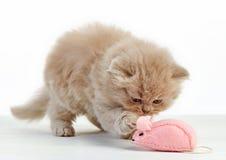 Kitten playing Stock Image