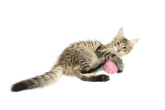 Kitten playing with pink wool ball Royalty Free Stock Photos
