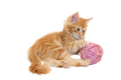 Kitten playing with pink wool ball Royalty Free Stock Photo