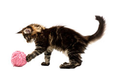 Kitten playing with pink wool ball Stock Photo