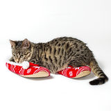 Kitten playing with a pompons on slippers Royalty Free Stock Photos