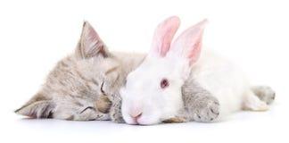 Kitten playing with rabbit Stock Image