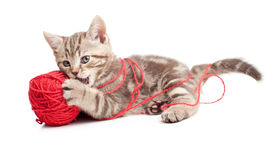 Kitten playing red clew or ball Stock Photos