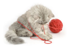 Kitten playing with red clew Royalty Free Stock Images