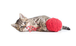 Kitten playing red clew isolated Royalty Free Stock Photography