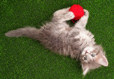 Kitten playing red clew of thread Stock Image