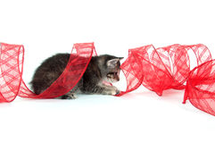 Kitten playing with red ribbon Royalty Free Stock Image