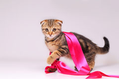 Kitten playing with ribbon Royalty Free Stock Photo
