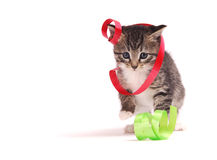 Kitten playing with ribbons. A tabby kitten playing with ribbons Royalty Free Stock Photography