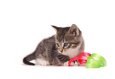 Kitten playing with ribbons. A tabby kitten playing with ribbons Stock Photos