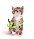 Kitten playing with ribbons. A tabby kitten playing with ribbons Stock Image