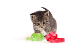Kitten playing with ribbons. A tabby kitten playing with ribbons Royalty Free Stock Photos