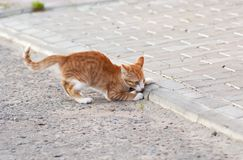 Kitten playing on a road Royalty Free Stock Image