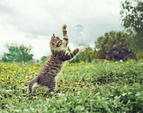 Kitten is playing with soap bubble Royalty Free Stock Images