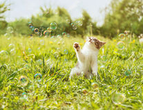 Kitten playing with soap bubbles Royalty Free Stock Photos